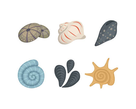 Sea shell vector icons in cartoon style. Set of clam mollusc. Ocean cockleshell. Stock Illustratie