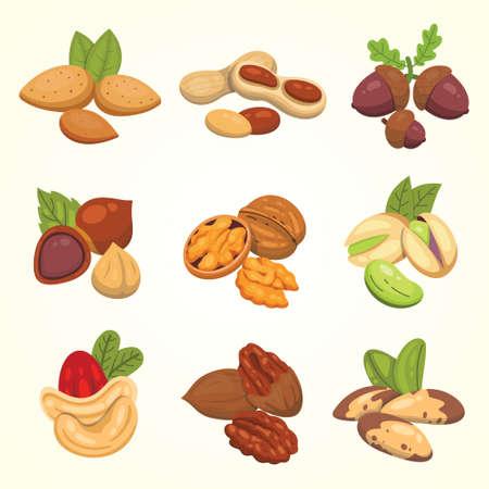 Définir des noix d'icônes vectorielles en style cartoon. Collection de nourriture aux noix. Arachide, noisette, pistache, noix de cajou, noix de pécan, noix, noix du Brésil, amande, gland Vecteurs