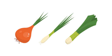 Half, slice and whole onion ripe. Yellow, red and spring onions vegetable vector set in cartoon style