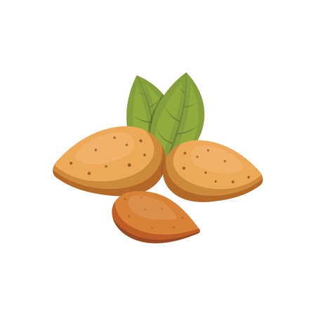 Almond vector icon nuts in cartoon style. Nut food collection