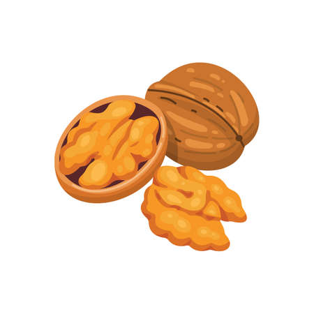 Walnut vector icon nuts in cartoon style. Nut food collection.