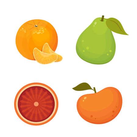 Fresh citrus fruits isolated vector illustration with tangerine, grapefruit, orange, pomelo. Vitamin C concept.