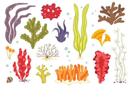 Icônes d'algues vectorielles isolées sur whire. Corail marin et plantes marines sous-marines. chlorella, spiruline, fucus et autres icônes.