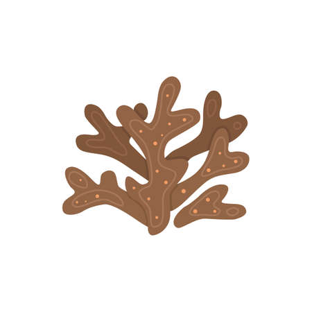 Vector seaweed icon isolated on whire. Sea underwater marine plant.