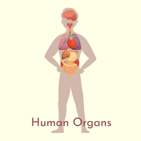 Vector internal organs collection in cartoon style. Anatomy of human body. Man biology organ: Heart, brain, lungs, liver, stomach, kidney and outher icons