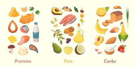 Macronutrients vector illustration. Main food groups : proteins, fats and carbohydrates. Dieting, healthy eating concept Ilustrace