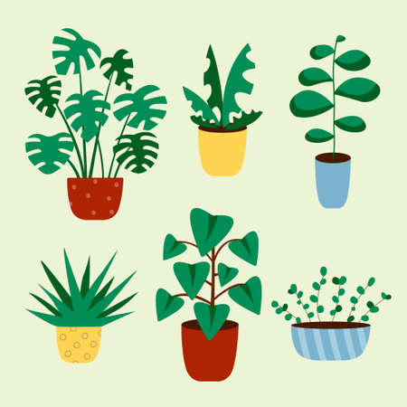 Cactus and succulent plant growing in pots. Vector Cacti and succulents collection of house plants.