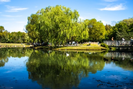 Beautiful Reflection of a Weeping Willow in the water in the Regional Park of Longueuil, Quebec, Canada