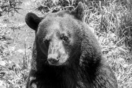 condone: Bear  Stock Photo