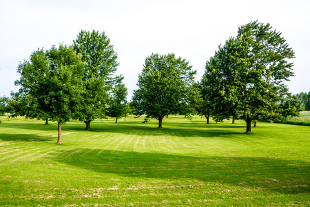 Trees on a large green space.