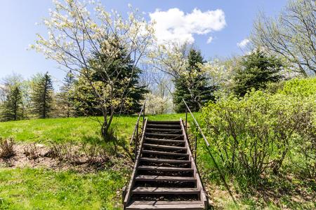 Escadas de madeira Exterior