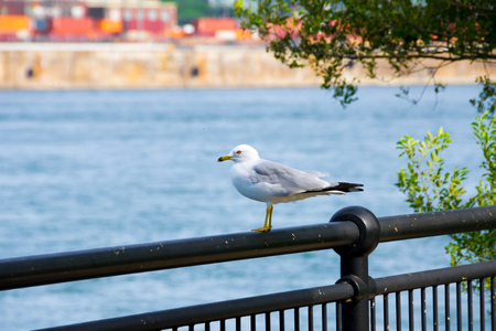 Seagull stands on a fence Stock Photo