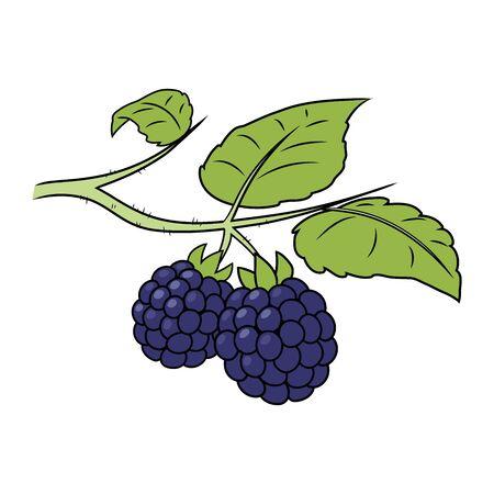 Illustration of a blackberry on a branch on a white background Ilustração