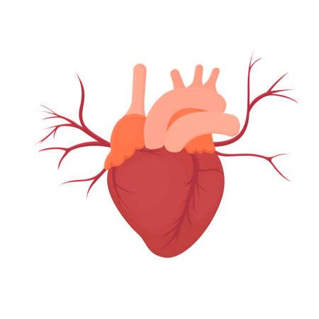 Human heart. Internal organs, vector illustration Illustration