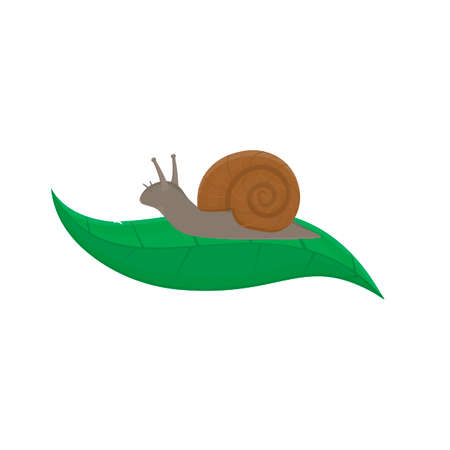 Snail. Animal slug, vector illustration