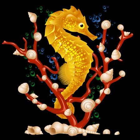 Sea horse   Vector Illustratie