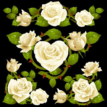 White Rose design elements Stock Vector - 8140900