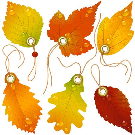 oaks: Autumnal discount Illustration