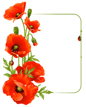 poppy leaf: Red poppy frame Illustration