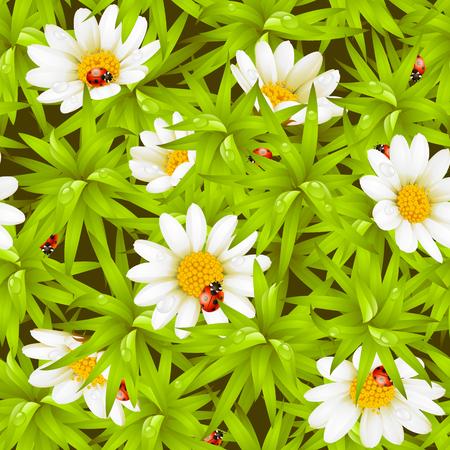 bovenaanzicht plant: Vector naadloze achtergrond: camomiles en lieve heers beestjes