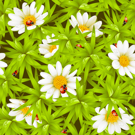 camomile flower: Vector seamless background: camomiles and ladybugs Illustration