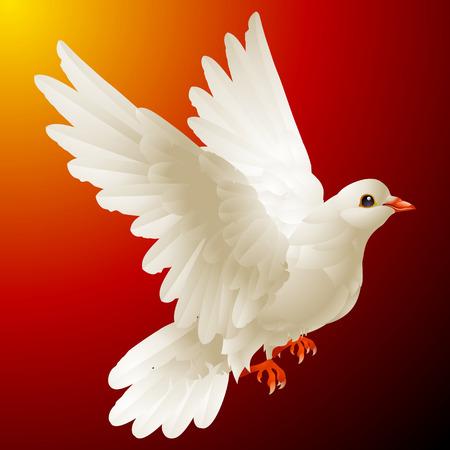 carrier pigeons: white dove Illustration