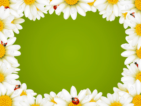 Camomile Floral Frame Stock Vector - 8202475