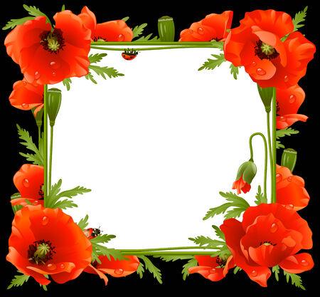 Poppy Floral Frame   Vector