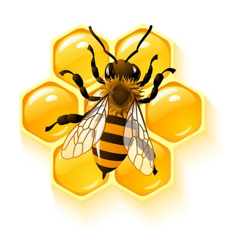 miel et abeilles: abeille et nid d'abeilles