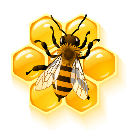 bee hive: bee and honeycombs Illustration