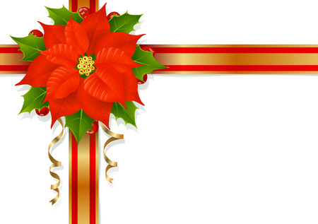 poinsettia: Christmas flower, holly and ribbons Illustration