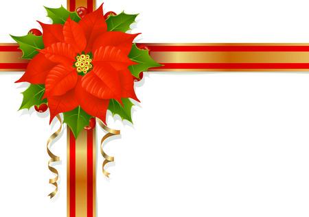 flor de pascua: Flor de Navidad, acebo y cintas  Vectores