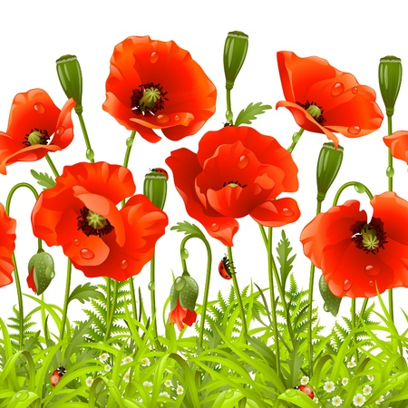 Seamless horizontal border with red poppy. Vector