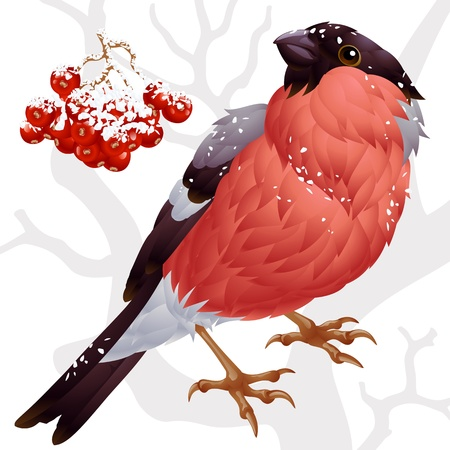 Bullfinch and ashberry Vector