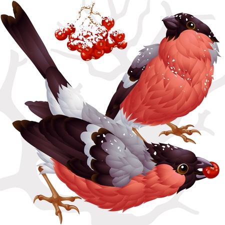 sparrows: Vector bullfinch and ashberry Illustration