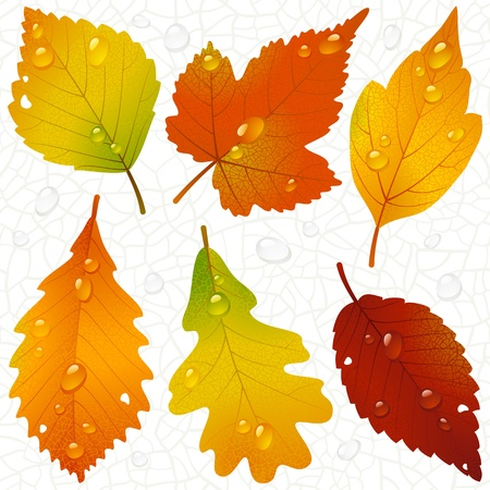 Vector autumn leaves and seamless vein background Ilustração
