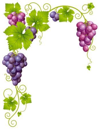 grapes on vine: Vector grape frame 3 Illustration