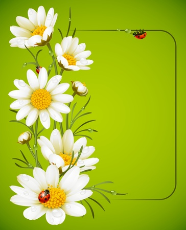 Camomile frame Stock Vector - 11222500