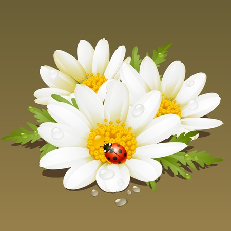 Camomile floral ornament. Flowers fresh background. Vector