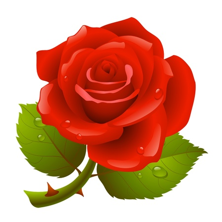 prickles: Red rose Vettoriali