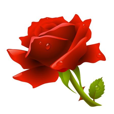 prickles: Rosa rossa Vettoriali