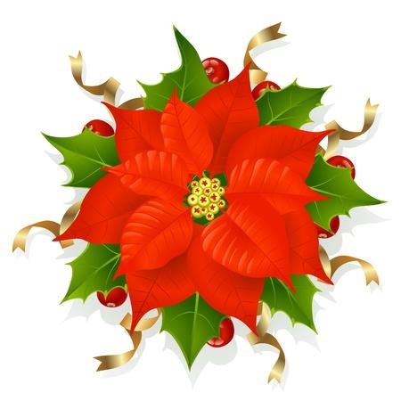 Christmas flower. Bethlehem star Vector