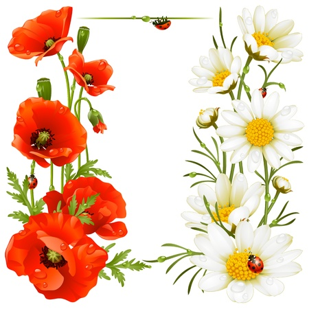 poppy leaf: Poppy and Camomile design elements Illustration