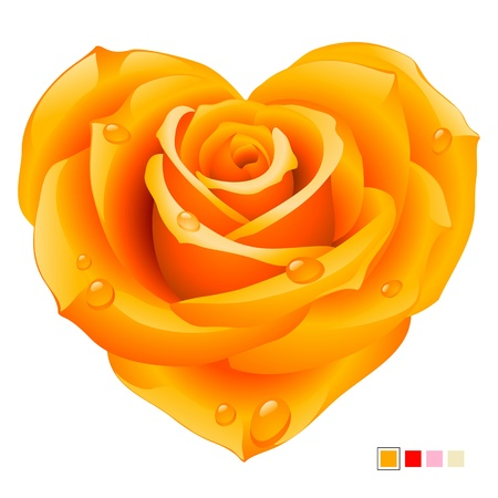 rose isolated: Yellow Rose in the shape of heart