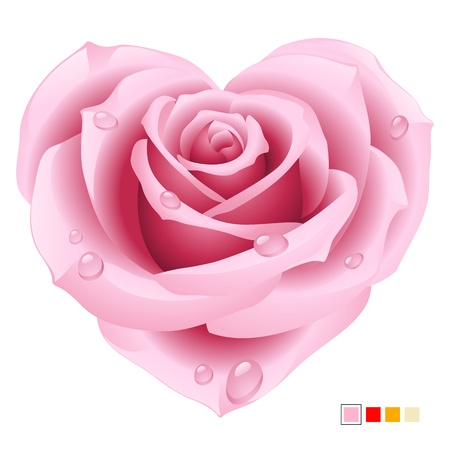 pink rose: Pink Rose in the shape of heart