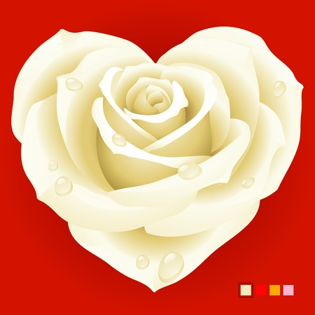 White Rose in the shape of heart Vector