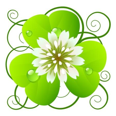 three leaf clover: Clover
