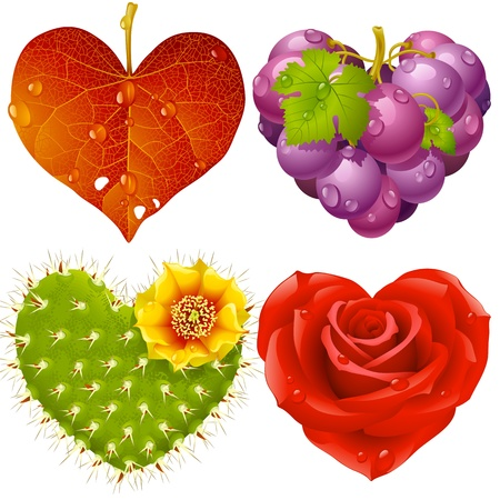 Shape of heart set 3. Fall leaf, grapes, cactus and rose Stock Vector - 12173250
