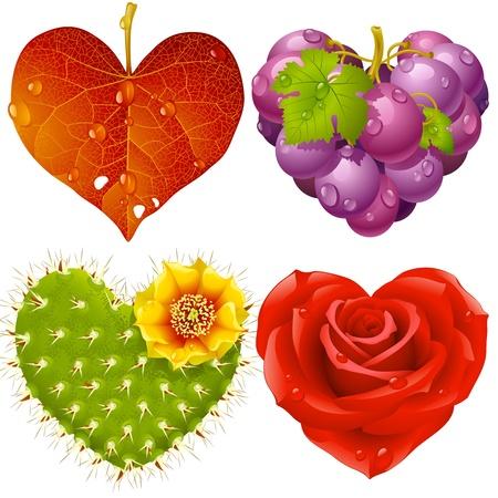 Shape of heart set 3. Fall leaf, grapes, cactus and rose Illustration