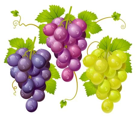 wei�e trauben: Drei Weintraube Illustration